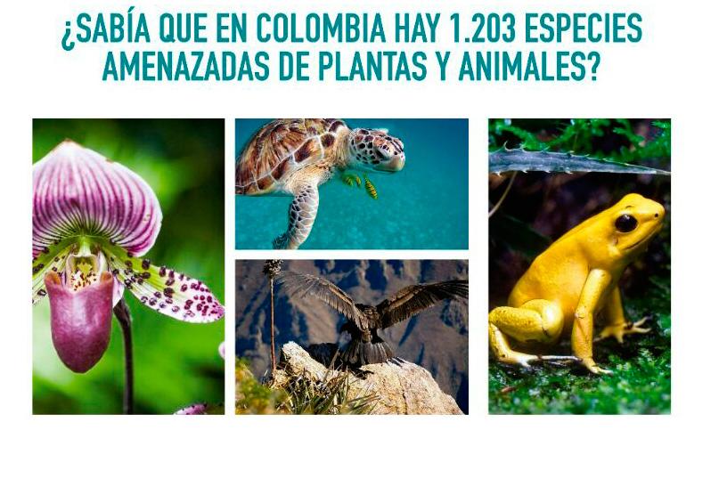 http://hoteledmarsantamarta.com/wp-content/uploads/p-colombia-especias-amenazadas-plantas-animales.jpg